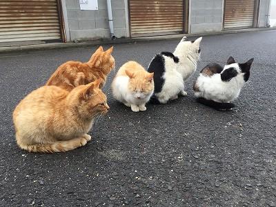 猫の子ども